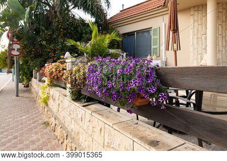 Nazareth, Israel, December 05, 2020 : Flower Pots On The Street In The Muslim Circassian - Adyghe Vi
