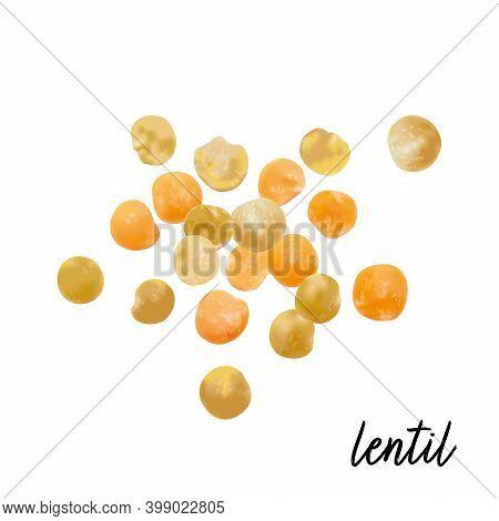 Lentils Isolated On White Background. Vector Illustration.