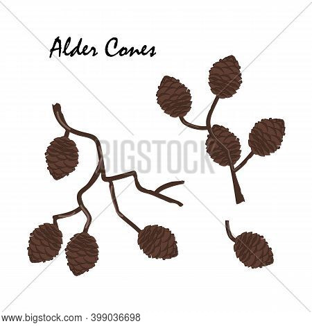 A Branch Of Alder With Cones Isolated On White Background. Vector Illustration. Branch Of Alnus Glut