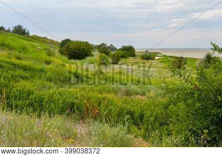 Terrain On The Coast Of The Azov Sea In The Rostov Region. Summer Time, Vegetation Of The Don Region