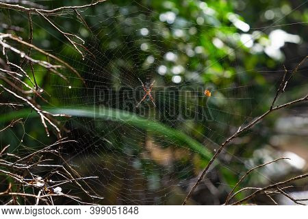Red Poisonous Spider On A Web In A Tropical Forest On The Island Of Koh Samui In Thailand, Fear Of S