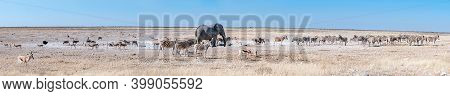 Panorama Of An African Elephant Drinking Water At The Nebrownii Waterhole In Northern Namibia. Burch