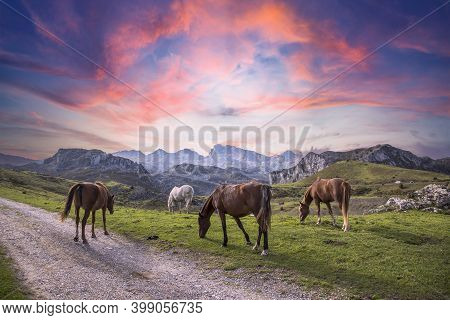 Wild Horses In The Mountains Of Lagos De Covadonga At Sunrise, Picos De Europa. Asturias, Spain