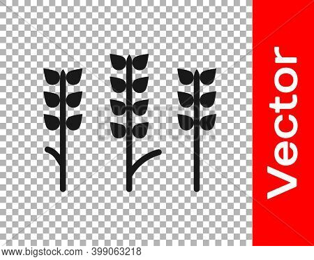 Black Cereals Set With Rice, Wheat, Corn, Oats, Rye, Barley Icon Isolated On Transparent Background.