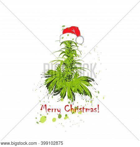 Cannabis Bush Of Hemp Or Marijuana Or Hashish Or Marijuana Branch, Cannabis Plant In Santa Claus Hat