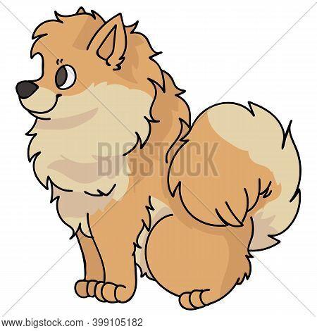 Cute Cartoon Pomeranian Sitting Dog Vector Clipart. Pedigree Kennel Doggie Breed For Kennel Club. Pu