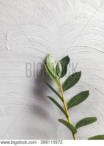 Twig Of Room Plant With Green Leaves On Concrete Wall Background. Grey Wall With Chaotic Beton Textu