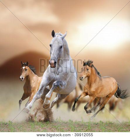 Horses In Sunset