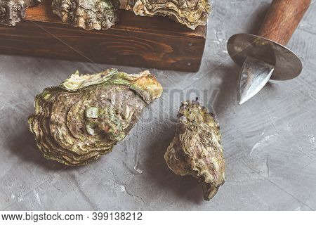 Fresh Oysters Close-up