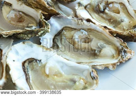 Opened Oysters On The White Plate, Close-up