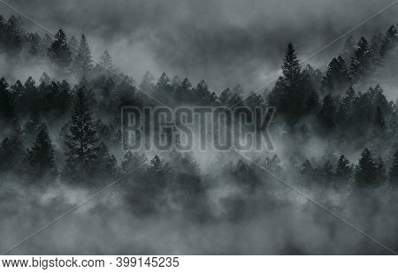 Foggy Dark Forest. Top View, Fog, Smog. Wild Forest Nature, Forest Landscape, Landscape. Abstract Fa