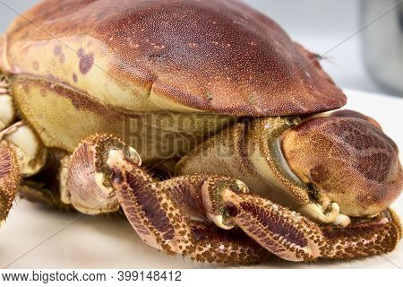 Crab From The Estuaries Of Galicia. Galicia Is One Of The World\'s Largest Seafood Producers