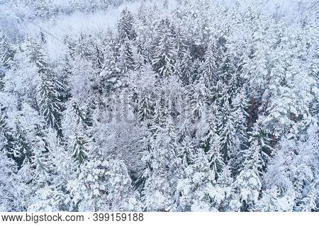 Forest Covered With Snow From Above. Winter Christmas Background. Winter Landscape Aerial Drone View