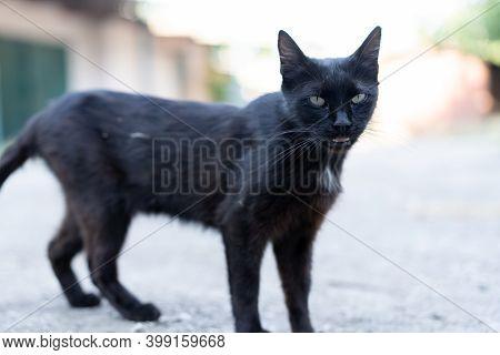 Black Stray Cat On The Street.black Stray Cat On The Street