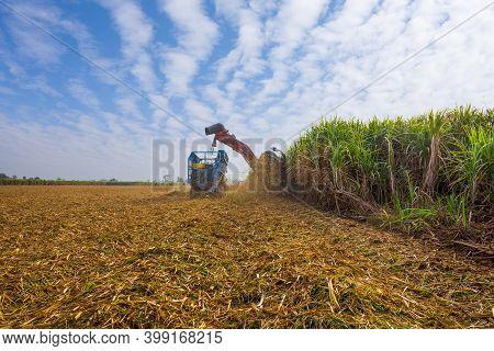 Sugar Cane Harvesting Machine Working
