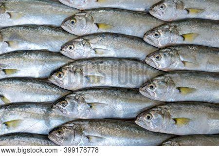 Full-screen Multiple Sea Fish (bluefish, Pomatomus Saltatrix) Background, Top View