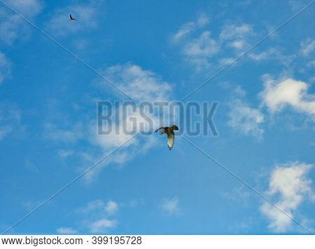 A Red-tailed Hawk Bird Of Prey Raptor Soars Flying Through A Bright Blue Sky With A Few White Clouds