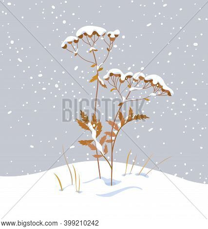 Winter Snow Covered Meadow Plants. Wild Herb Under The Snow On Gray Background. Winter Scenery Fragm