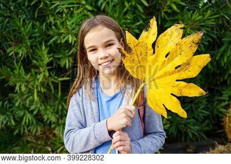 Funny Cute Girl Teen With A Large Yellow Autumn Leaf In Front Of A Green Hedge