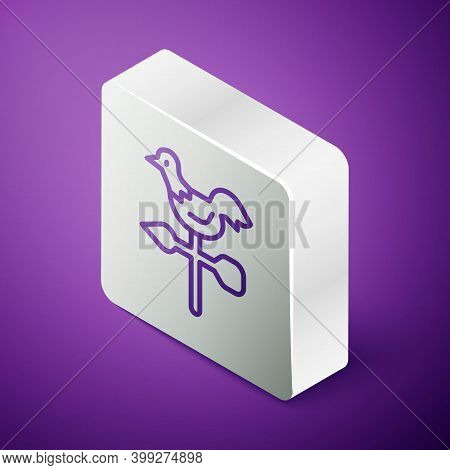 Isometric Line Rooster Weather Vane Icon Isolated On Purple Background. Weathercock Sign. Windvane R