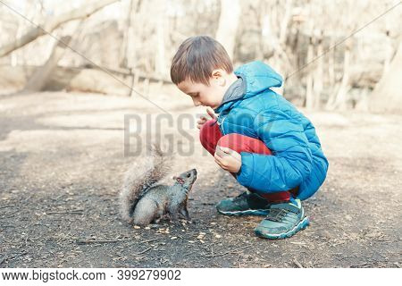 Cute Caucasian Boy Feeding Grey Squirrel In Park. Adorable Little Kid Giving Food Nuts To Wild Anima