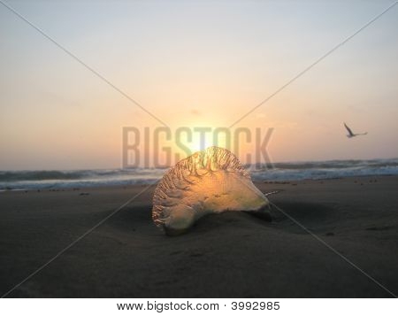 sun rising over a portugese man of war jelly fish poster