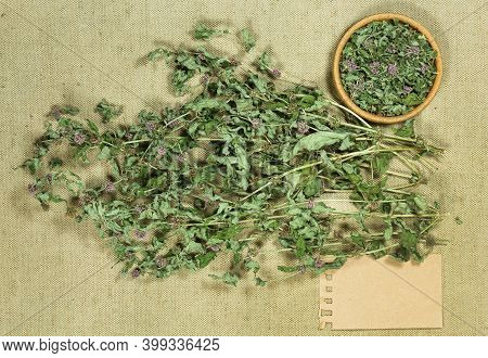 Mint, Spearmint. Herbs For Use In Alternative Medicine, Phytotherapy, Spa Or Herbal Cosmetics. Prepa