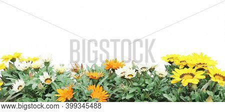 First spring wildflowers yellow, white and orange Adonis vernalis (Pheasant's eye). Horizontal summer banner with False hellebore flowers on flowerbed. Isolated on white background