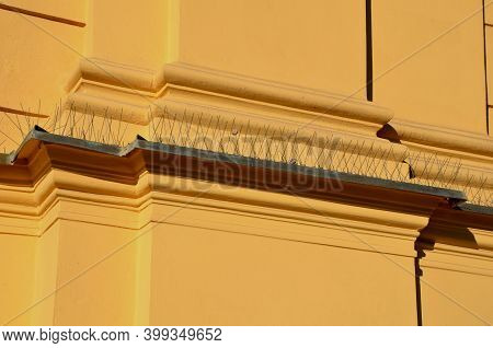 Protection Of Urban Buildings And Dogs Through The Feces Of Pigeons. Damage To The Windows Of Statue