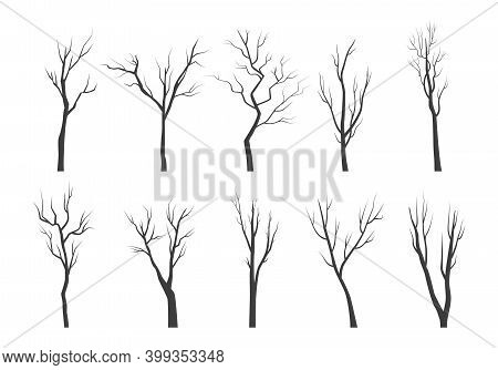 Tree Branch Silhouette Set. Bare Twisting Stems Of Plants With Various Tracery Forms Of Growth Winte