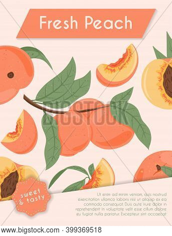 Ripe Peaches, Whole, Sliced And Half Sliced Peaches. Sweet Nectarine Fruits Vector Hand Drawn Card D