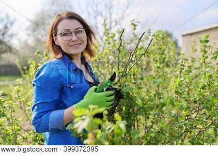 Working Mature Woman In Spring Garden With Pruners. Female Doing Seasonal Pruning Forming A Black Cu
