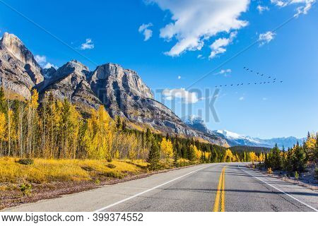 Canadian Rockies. The sharp peaks of the Rocky Mountains are clearly visible against the blue sky. The yellow foliage of birches and aspens. Asphalt highway leads to Abraham Lake