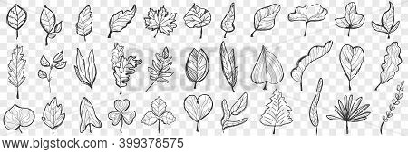 Leaves Doodle Set. Collection Of Hand Drawn Beautiful Fallen Leaves Of Different Shapes And Forms Is