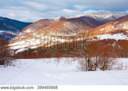 Winter Landscape In Afternoon Light. Beautiful Nature Scenery In Mountains. Leafless Trees On A Snow