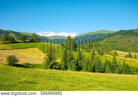 Mountainous Countryside In Summertime. Grassy Field In Front On The Forest On Rolling Hills At The F