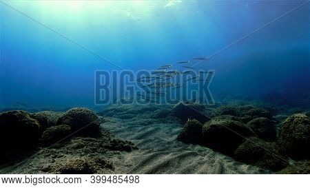 Underwater Photo Of Shoal Of Barracudas Over The Reef. From A Scuba Dive Off The Coast Of The Island