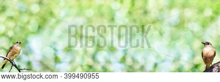 Unfocused Wide Summer Background With Birds Sitting On Branches. Banner, Art Design