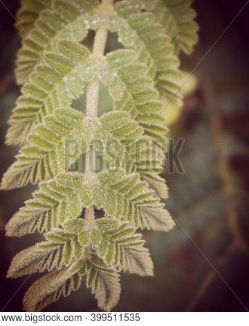 Photo Of Artistic Tamarindus Indica Leaves In The Forest