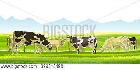 A Herd Of Cows Grazes Among The Rural Hills. Pastures. Meadows And Fields. Rustic Village Landscape.