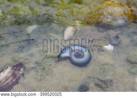 River Mollusk On The Background Of Wet River Sand, River Bank. Beach Under Hot Sun With Seashells Cl