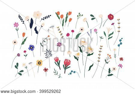 Floral Set Of Beautiful Blooming Wildflowers And Leaves. Botanical Collection Of Cut Meadow And Gard
