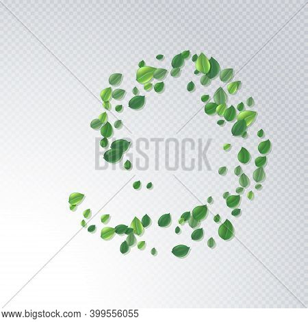 Round Frame Made Of Flying Green Tea Leaf Isolated On White. Leaves Spring Background. The Premium G
