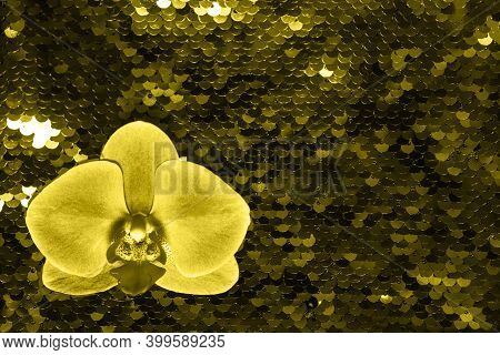 Colo Trend 2021 -yellow Orchid On Bright Gray Glance Background Made Of Two-sided Sequins. Holiday C