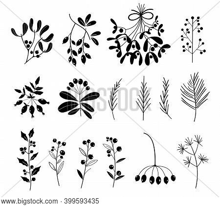 Set Of Black And White Silhouettes Of Plants Isolated On White Background. Christmas Floral Collecti