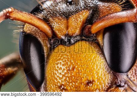 Micro shot of hornet insect. Top margin of the head and part of head details are well seen on the picture.