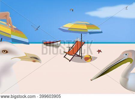Landscape Beach Sea Seabirds Landscape Beach Sea Seabirds
