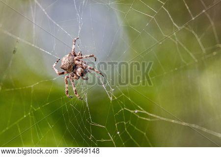Close Up Macro Shot Of A European Garden Spider (cross Spider, Araneus Diadematus) Sitting In A Spid