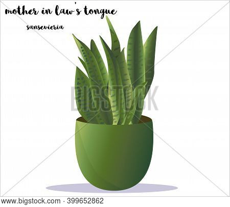 Sansevieria Mother In Laws Tongue House Plant In The Pot With A Name. Text