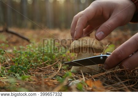 Man Cutting Porcini Mushroom With Knife In Forest, Closeup